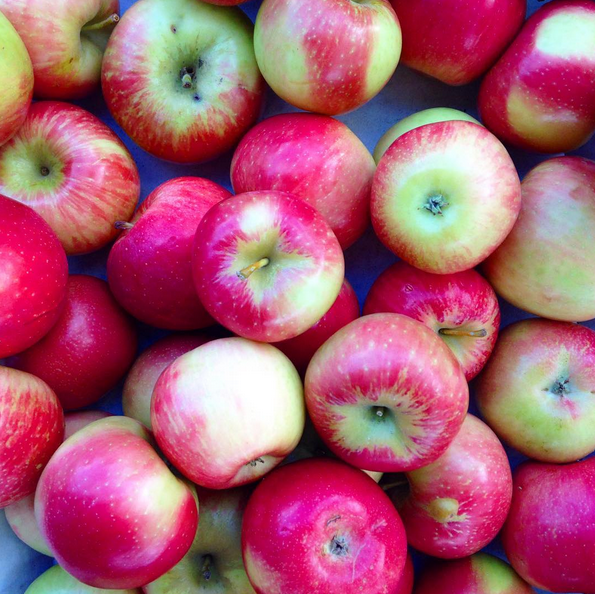 MEDFORD FARMERS MARKET APPLES