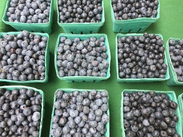 Medford Farmers Market blueberries