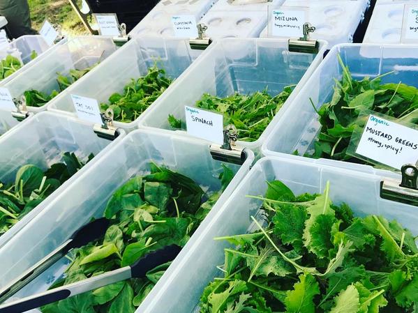 medford-farmers-market-greens
