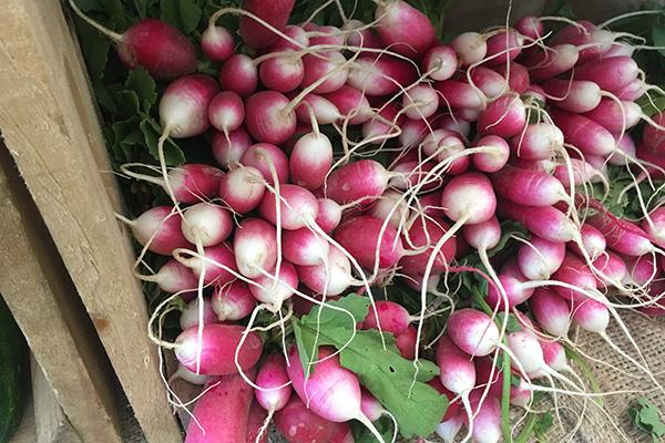 medford-farmers-market-radishes