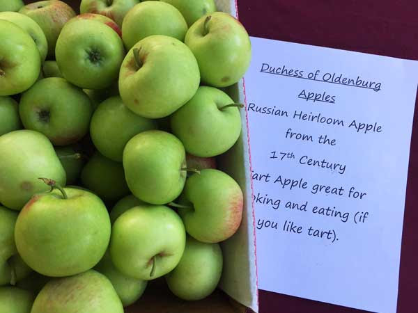 medford-farmers-market-apples